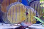 Zierfische teichfische aquarienpflanzen teichpflanzen und for Teichfische arten